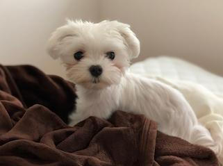 犬のパンナ