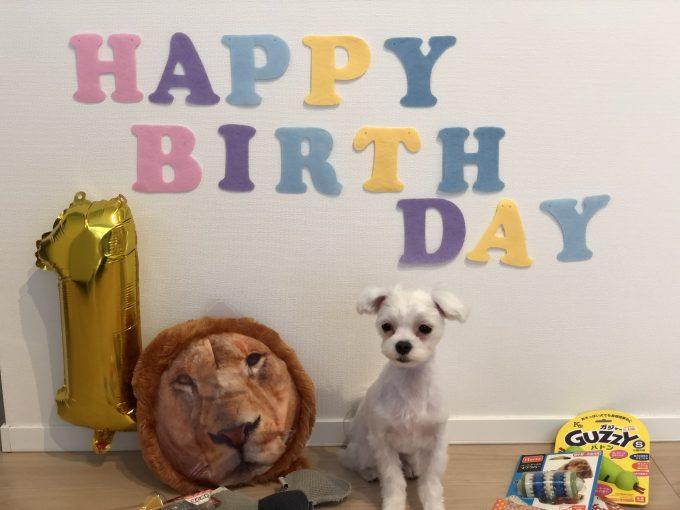 パンナの誕生日記念撮影