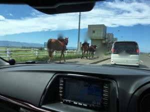 馬に追い抜かれる