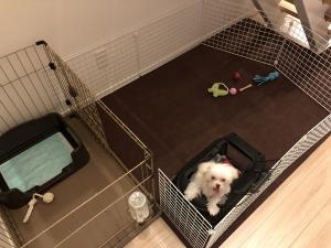 犬の自作サークル