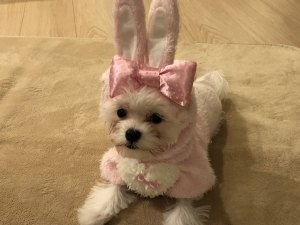 ウサギのパンナ